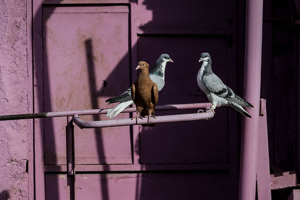 محله های رنگی ایران - خیابان های رنگی ایران - خانههای رنگی خیابان نواب قزوین