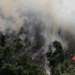 آمازون؛ قربانی شعله های آتش
