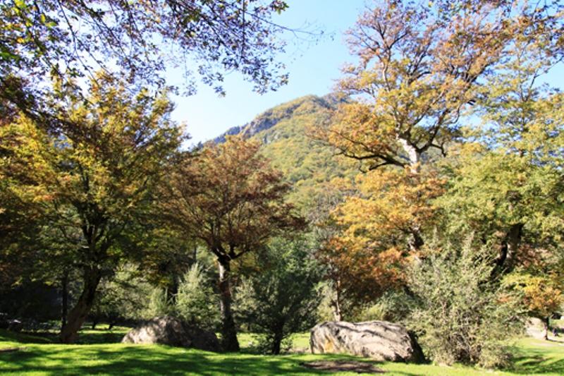 جنگل توسکستان