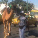 گردشگر ایرانی با شتر به سفر دور جهان رفت | سفری که بیش از دو سال طول میکشد!