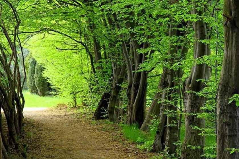 جنگل ناهارخوران
