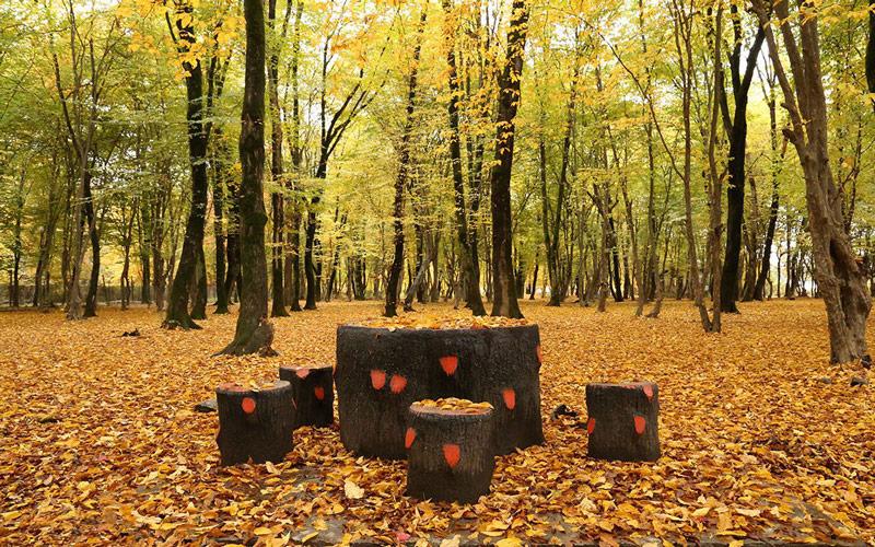 جنگل النگدره گرگان