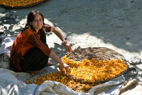 زردآلود خوردن در هونزا