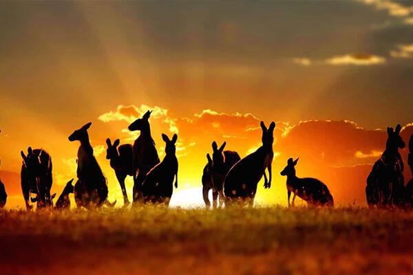 دانستنی هایی درباره استرالیا